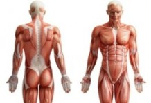 facts about human Body, human body facts, human body organs, human body water, human body blood, human body fun facts, human body parts